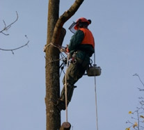 Tree Surgery Picture